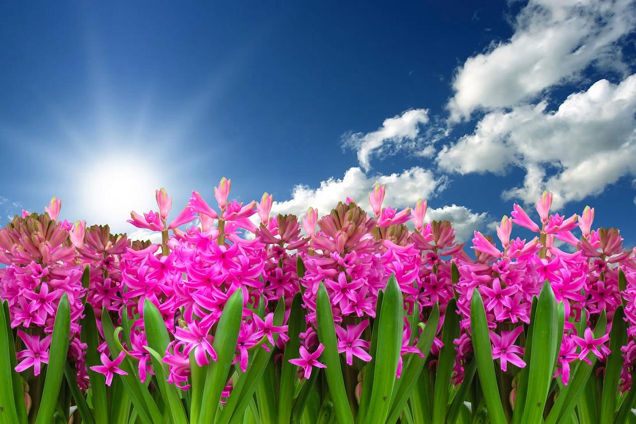 Top 4 Reasons To Plan A Spring Trip To Marthas Vineyard Marthas